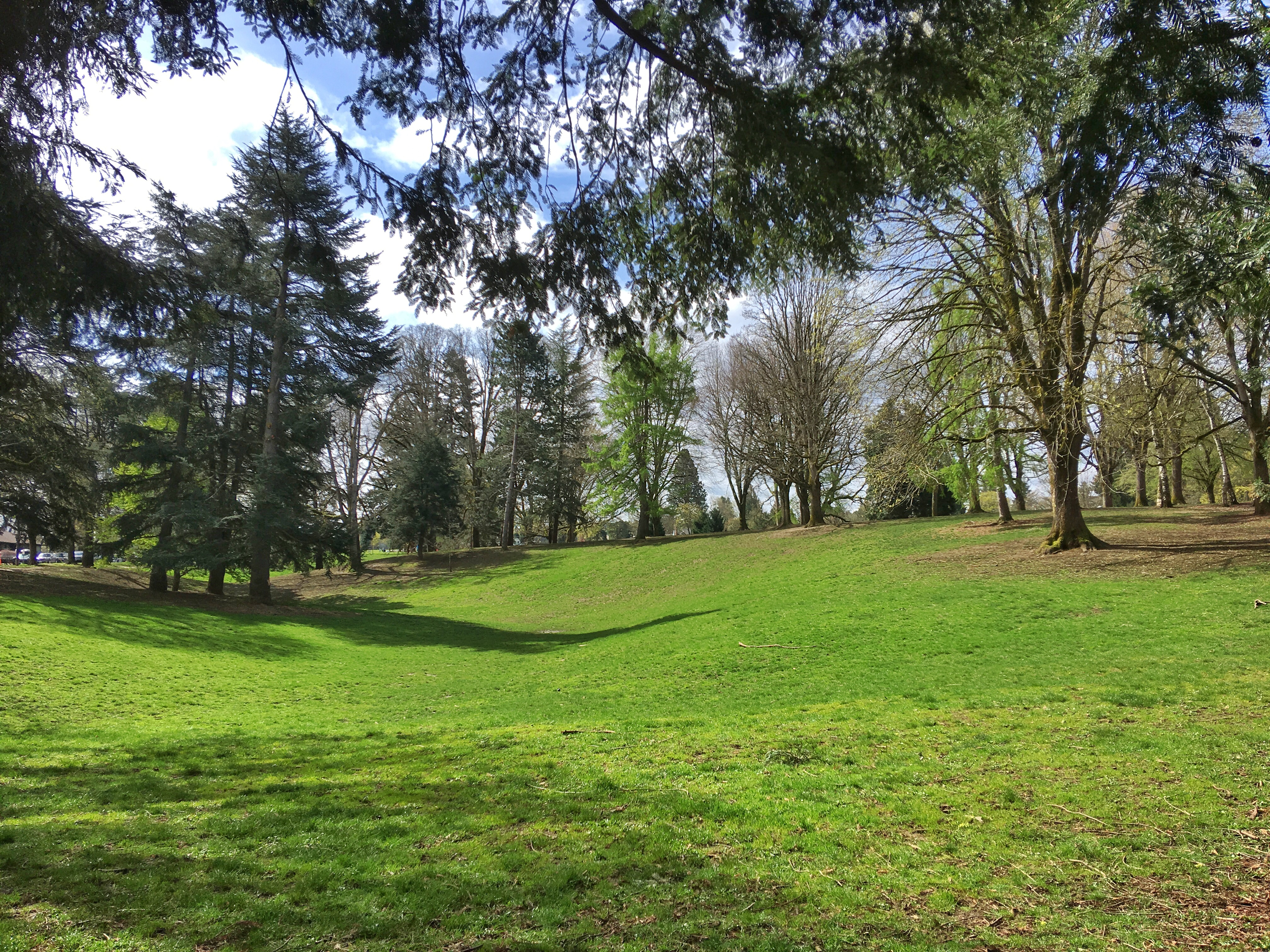 Fernhill Park From Wild Thicket To Popular Neighborhood Park